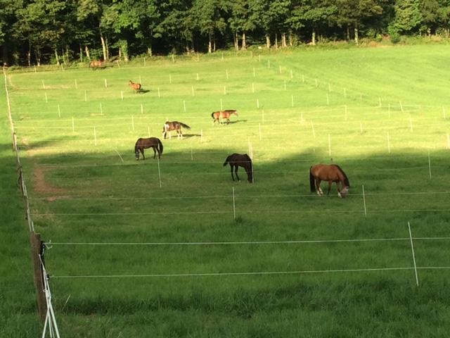 Jedes Pferd hat bei uns 2 Weiden zur Verfügung